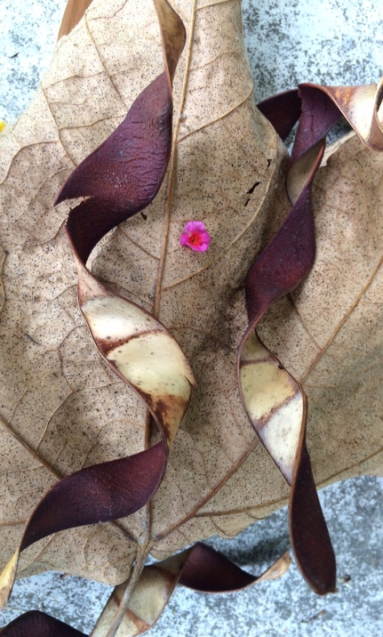 Seed pods and a small lantana flower